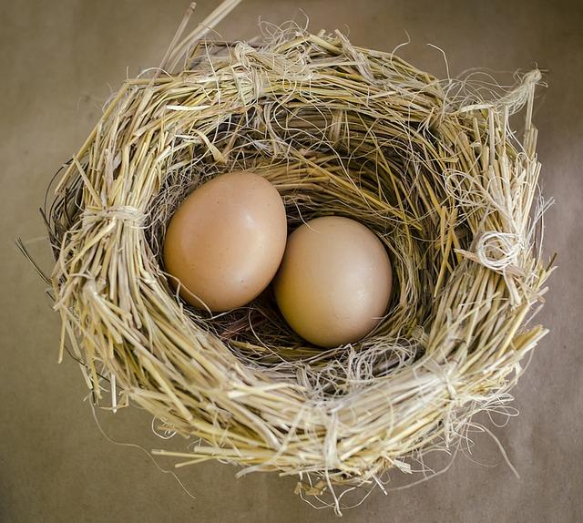 cubadora de huevos