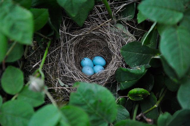 encubadora de huevos
