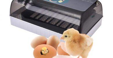hhd incubadora